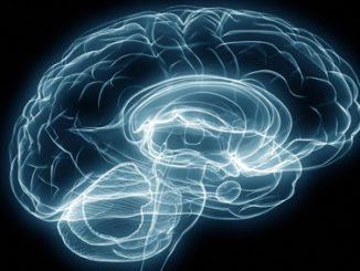 brain,thinking