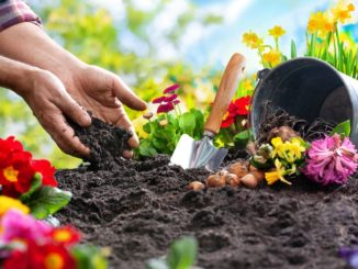 """To plant a garden is to believe in tomorrow"": how gardening can help you flourish"