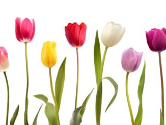 Four ways to metaphorically spring clean your practice